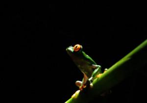 visit-costa-rica-frog