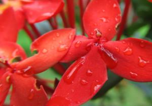 visit-costa-rica-flowers