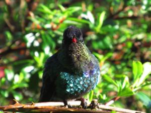 visit-costa-rica-dota-hummingbird