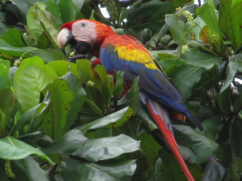 visit-costa-rica-south-pacific-corcovado