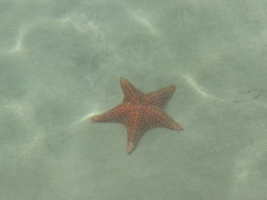 visit-bocas-del-toro-with-elemento-natural-starfish