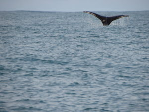 ballena-national-park-costa-rica
