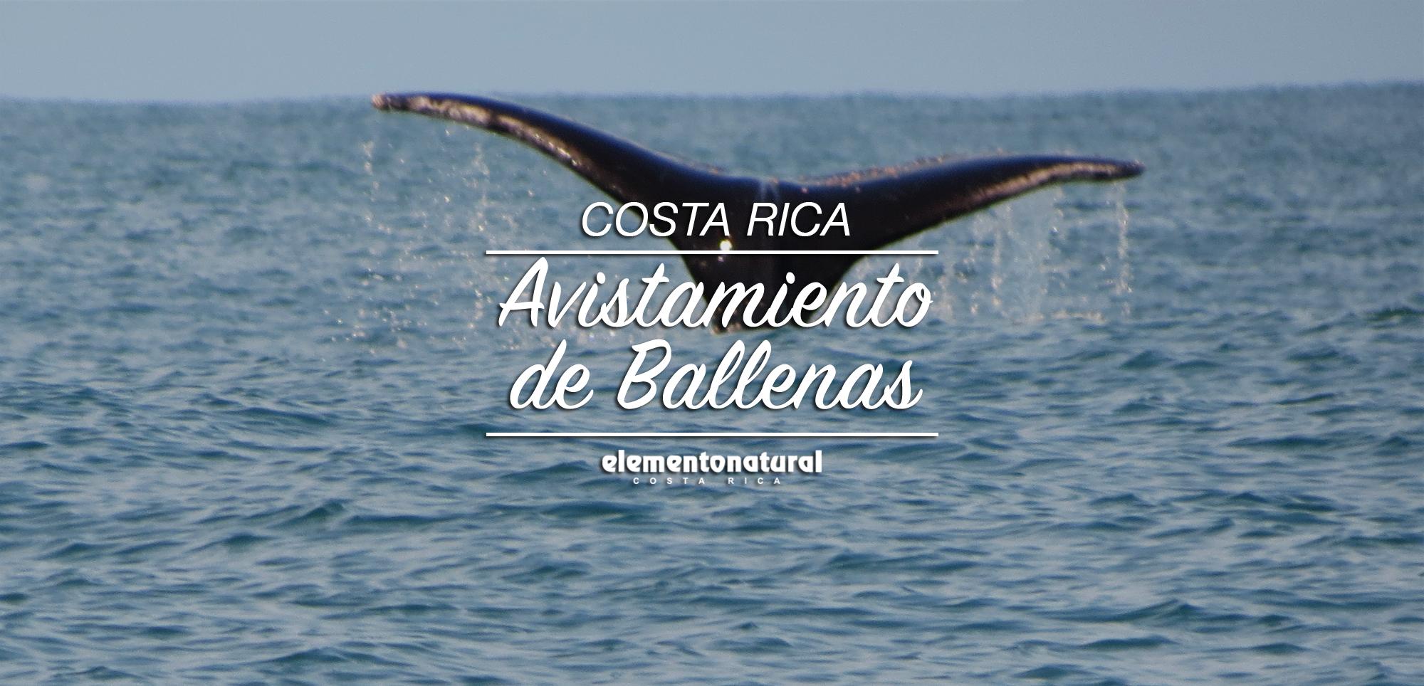 avistamiento-de-Ballenas-en-costa-rica