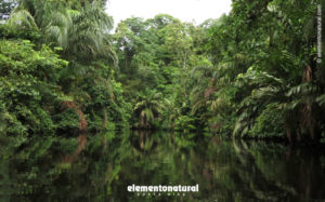 visit-costarican-caribbean-tortuguero