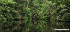 your-trip-to-caribbean-paradise-starts-with-tortuguero