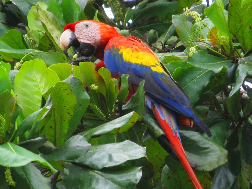 Bird watching in Costa Rica