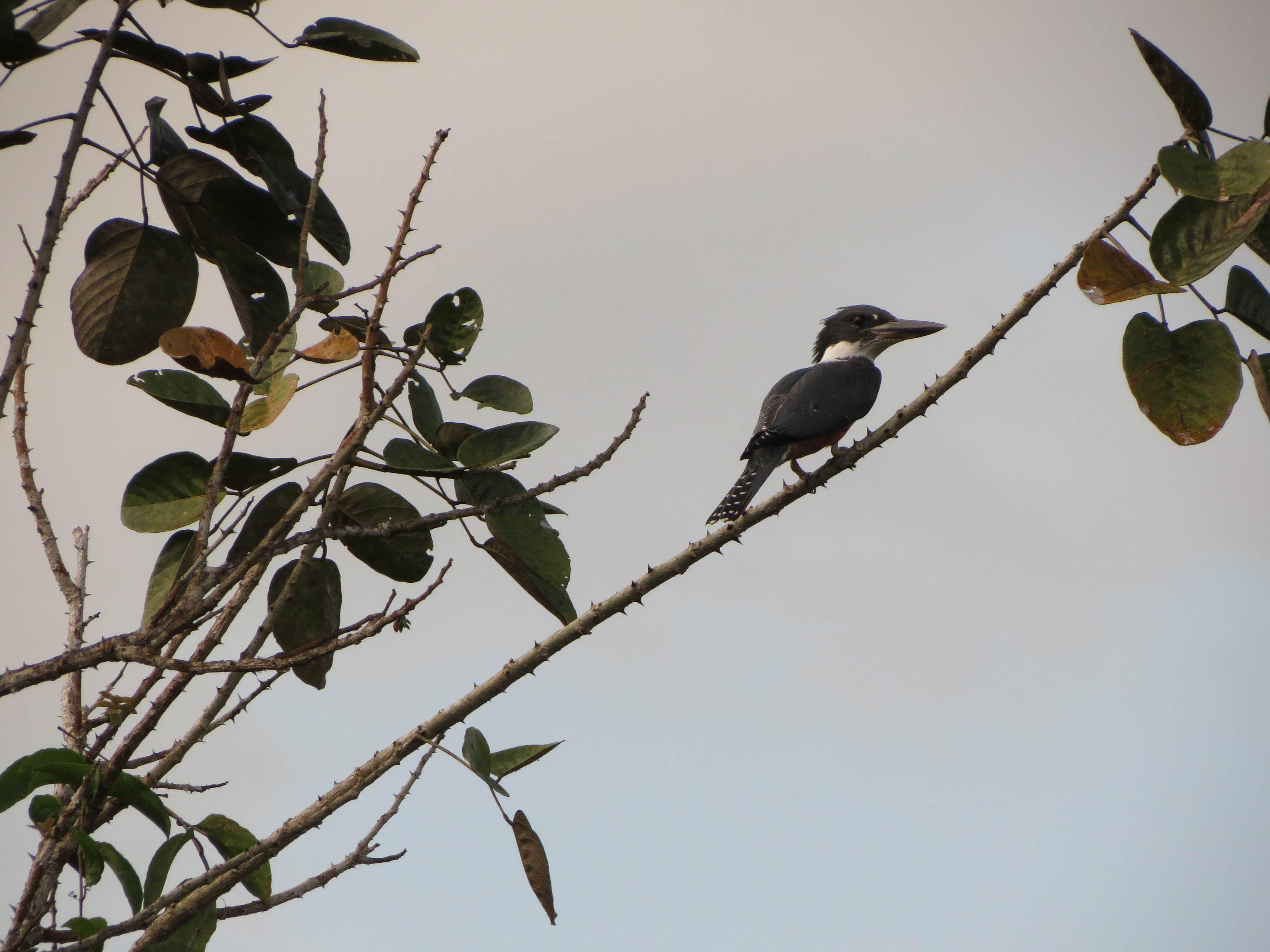 Birding in Costa Rica