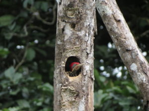 Bird watching Costa Rica