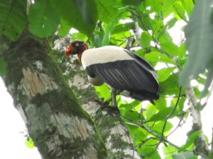 Bird watching in Costa Rica