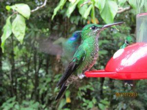 Visit Monteverde Costa Rica