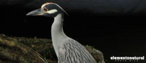 bird-watching-in-costa-rica