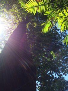 Visit Monteverde