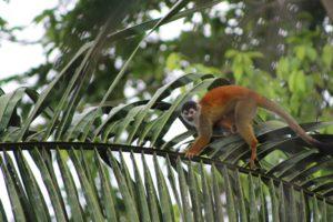Visit Costa Rica - Osa