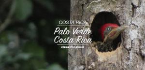 palo-verde-costa-rica