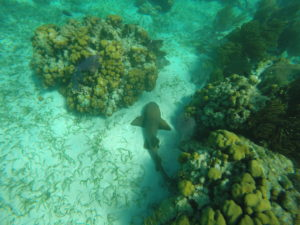 Snorkel Shark Ray Ally, San Pedro, Belize