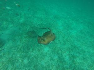 Snorkel Mexico Rocks and 3 cocos, Belize