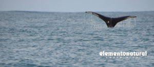 Whale watching season in Costa Rica