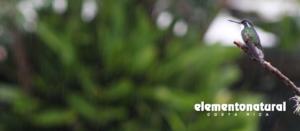Blog Elemento Natural Costa Rica