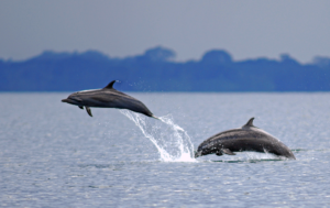 Dolphin watching Costa Rica