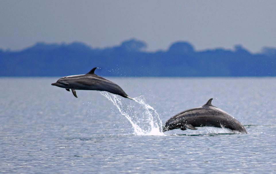 Dolphin watching Costa Rica