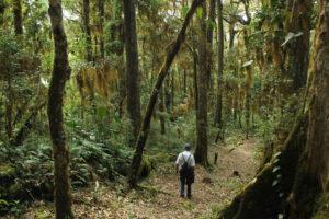 Travel Costa Rica, hike Cerro de la Muerte